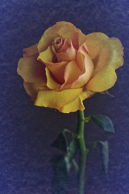 Poster featuring the photograph Vintage Single Rose by Richard Cummings
