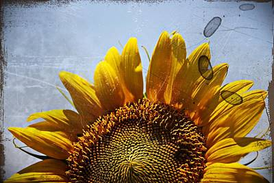 Vintage Sunflower- Fine Art Poster by KayeCee Spain
