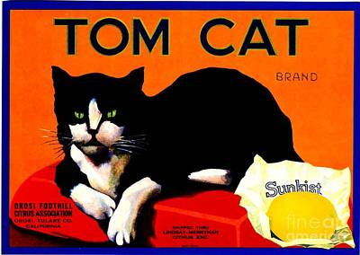 Vintage Sunkist Tom Cat Poster