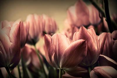 Vintage Tulips Poster by Jessica Jenney