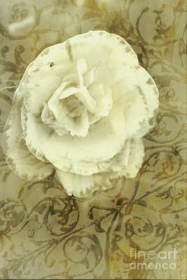 Vintage White Flower Art Poster