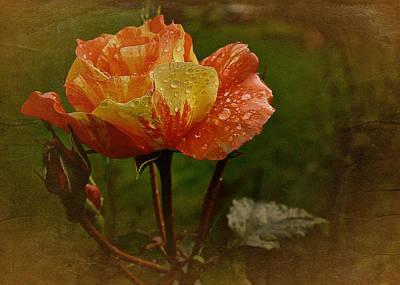 Vintage Sunset Rose Poster