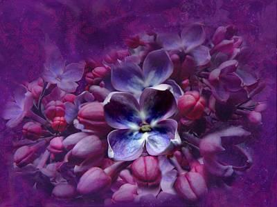 Violet Lilac Poster