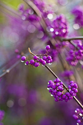 Vivid Beauty Berries Poster