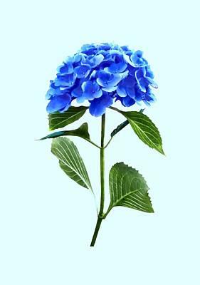 Vivid Blue Hydrangea Poster by Susan Savad