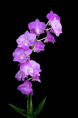 Vivid Purple Orchids Poster