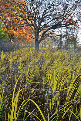 Poster featuring the photograph Volo Bog Natural Area by Ray Mathis
