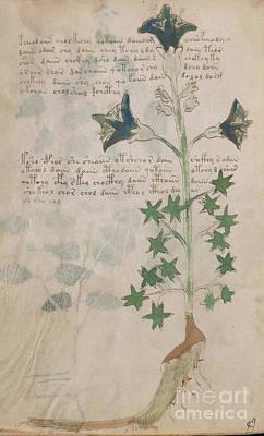 Voynich Flora 03 Poster