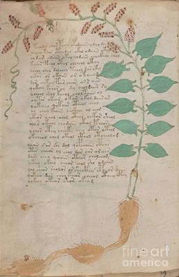 Voynich Flora 07 Poster