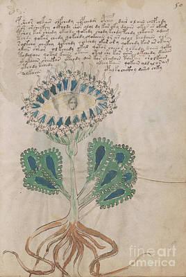 Voynich Flora 11 Poster