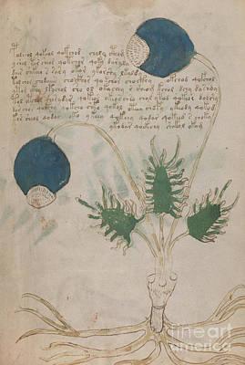 Voynich Flora 20 Poster