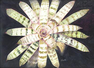 Vriesea 'white Lightning' Poster