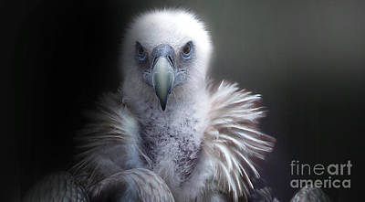 Poster featuring the photograph Vulture 2 by Christine Sponchia