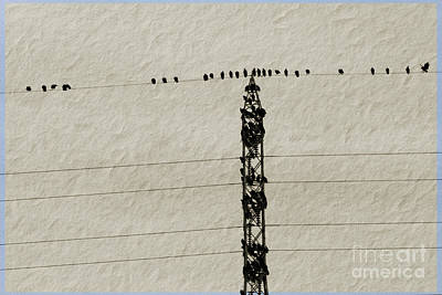 Vultures On A Powerline Poster by As the Dinosaur Flies Photography