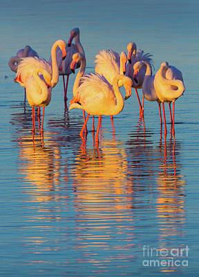 Wading Flamingos Poster by Inge Johnsson