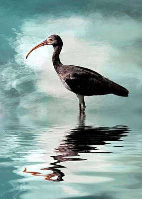 Wading Ibis Poster by Cyndy Doty