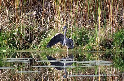 Wading In Heron Poster