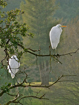 Waiting Egrets Poster
