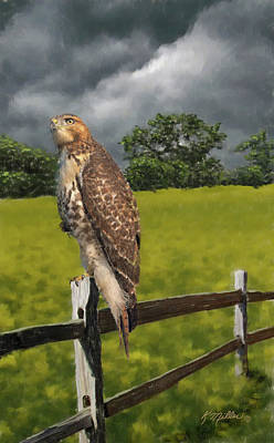 Waiting For The Storm - Red Tail Hawk Poster by Kathie Miller