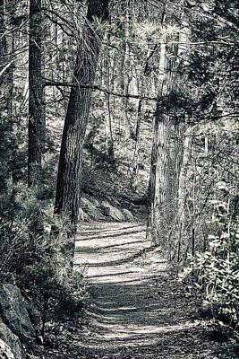 Walden Woods Poster by Peter Schnabel