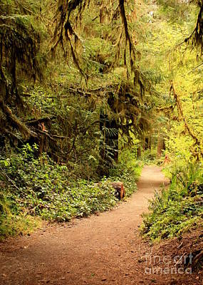 Walk Into The Forest Poster by Carol Groenen