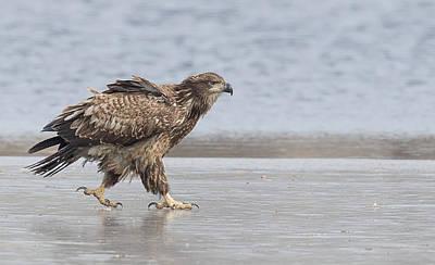Walk Like An Eagle Poster