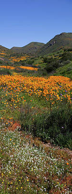 Poster featuring the photograph Walker Canyon Poppies by Cliff Wassmann