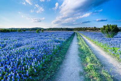Walking In A Bluebonnet Field - Texas Poster