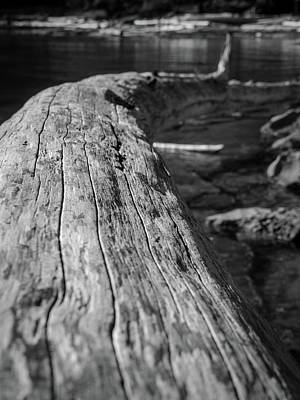 Walking On A Log Poster
