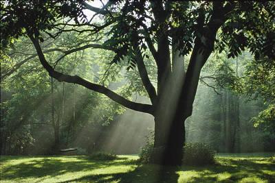 Walnut Tree And Swing Poster by Richard Danek