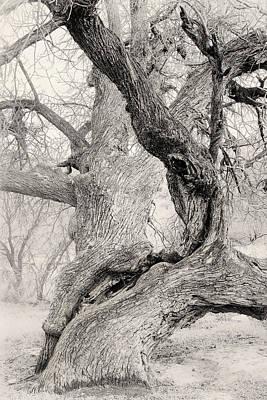 Walnut Tree In Winter Poster by Joseph Smith