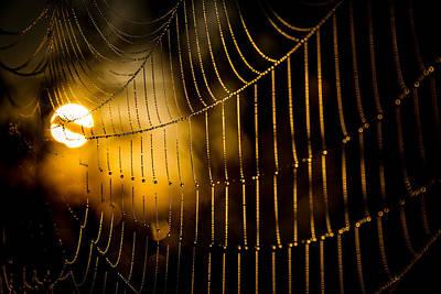 Warm Cobwebs And Dewdrops Poster