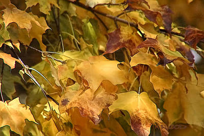 Poster featuring the photograph Warm Fall Leaves by Michael Flood