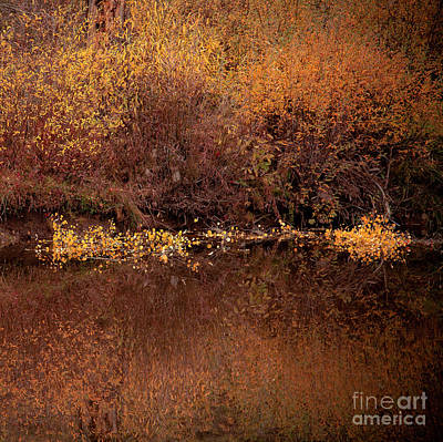 Poster featuring the photograph Warm Reflection by The Forests Edge Photography - Diane Sandoval