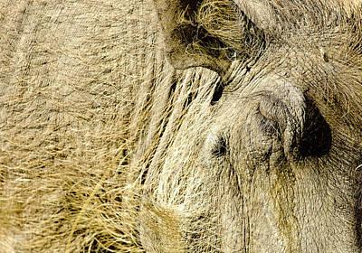 Warthog I Poster