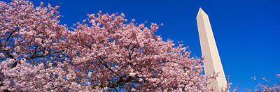 Washington Monument & Spring Cherry Poster by Panoramic Images