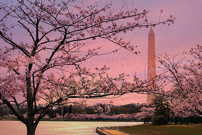 Poster featuring the photograph Washington Monument Cherry Blossom Festival by Shelley Neff