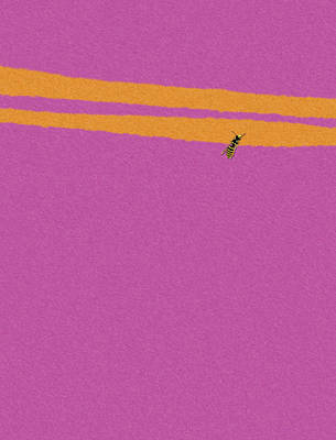 Wasp On Pink Fur Poster by Pascal VERSAVEL