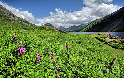 Wastwater Foxgloves Poster by Nichola Denny