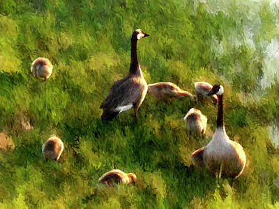 Watchful Parents - Impressionist Canada Geese Wildlife Painting Poster by Rayanda Arts