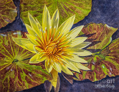 Water Lilies 2 Poster by Fiona Craig