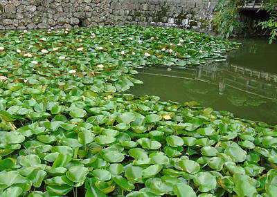 Water Lilies In The Moat Poster