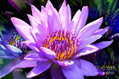 Water Lily In Purple Poster by Jeannie Rhode
