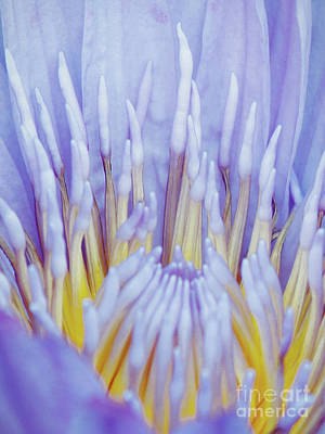 Water Lily Nature Fingers Poster