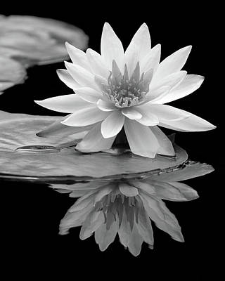 Water Lily Reflections I Poster