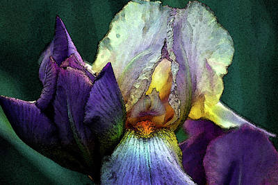 Watercolor Cream And Purple Bearded Iris With Bud 0065 W_2 Poster