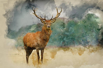 Watercolor Painting Of Portrait Of Majestic Red Deer Stag In Aut Poster