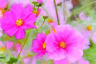 Poster featuring the painting Watercolor Pink Cosmos by Bonnie Bruno