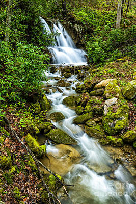 Waterfall Back Fork Of Elk Poster