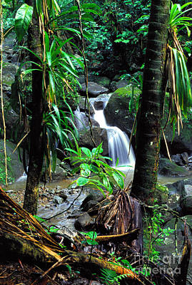 Waterfall El Yunque National Forest Mirror Image Poster by Thomas R Fletcher